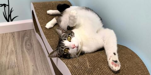 Does My Cat Need More Exercise?, Honolulu, Hawaii