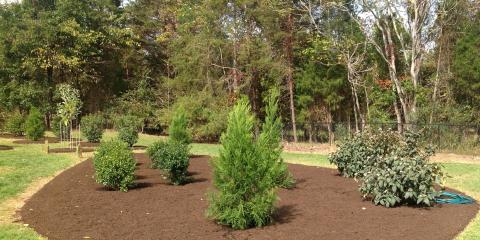 Making a Difference: The Importance of Planting Trees, Greensboro, North Carolina