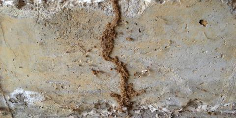 What to Know About Termite Mud Tubes, Maineville, Ohio