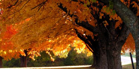 Landscaping 101: A Guide to Planting Trees & Shrubs in the Fall, Fairfield, Ohio