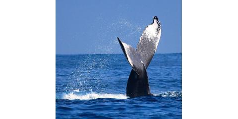 What to Know Before Going on a Whale Watching Tour in Kauai, Kekaha-Waimea, Hawaii