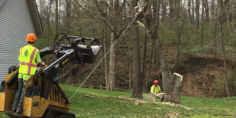 Why You Should Remove Dead Trees From Your Property, Wood River, Illinois