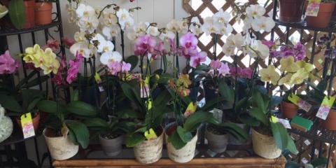 Roaring Oaks Florist, Florists, Shopping, Lakeville, Connecticut