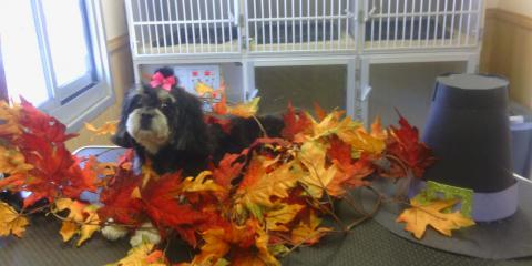 Happy Thanksgiving  to all of our furry friends and their families!, Lincoln, Nebraska