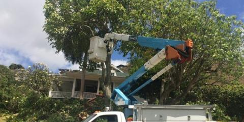 Sherwood's Tree Service, Shrub and Tree Services, Services, Honolulu, Hawaii
