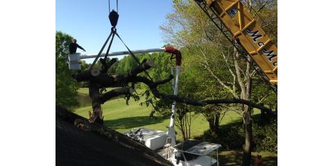South Carolina's Landscaping Experts Explain How Stump Grinding Works, York, South Carolina