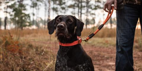 How to Prep Your Dog for Hunting Season, Jacksonville East, Florida
