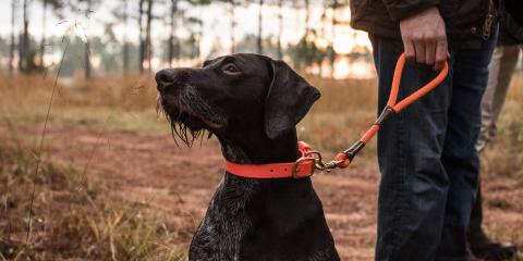 4 Must-Have Items When Duck Hunting With Your Retriever, Jacksonville East, Florida