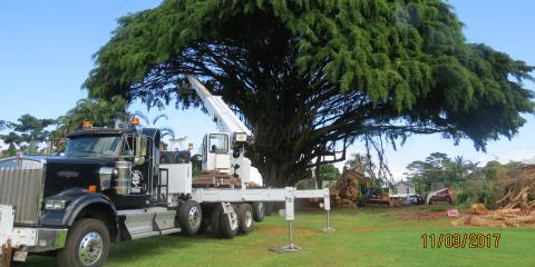 3 Key Signs You Need Tree Trimming, Hilo, Hawaii