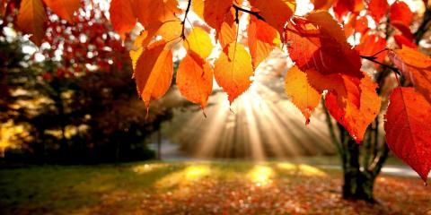 Fall Cleanup Offer and Discount , Lewisburg, Pennsylvania