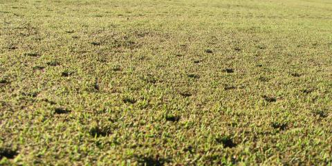 When Is The Best Time For Aeration And Reseeding, Denver, Colorado