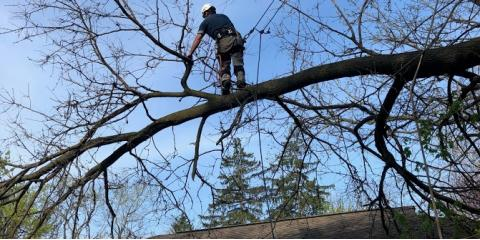 A Guide to Tree Trimming and Pruning, ,