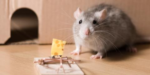 5 Tips for Rodent Control in Your Home, North Hempstead, New York