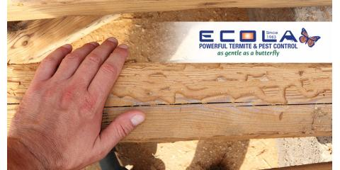 """Have you seen """"wood shavings"""" around your home?, San Diego, California"""