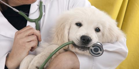 6 Examples of Business Insurance Coverage Veterinarians Need, Woodstock, Georgia