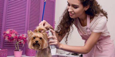 3 Types of Insurance You Need When Working With Animals, New Braunfels, Texas