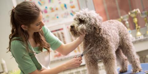 What Insurance Will You Need If Your Business Works With Animals?, Fairfield, Ohio