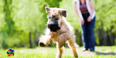 3 Tips for Training Your Dog With an Invisible Fence, Newtown, Connecticut