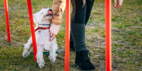 3 Professional Pet Training Tricks to Try With Your Dog, Newtown, Connecticut