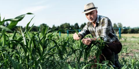 How Agricultural Runoff Affects Drinking Water, Anamosa, Iowa