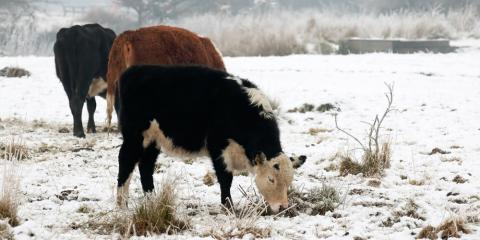 3 Tips for Taking Care of Livestock in Extreme Conditions, New Vienna, Iowa