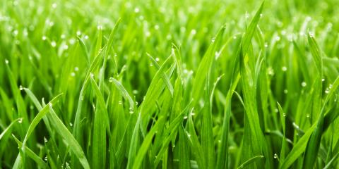 3 Common Lawn Maintenance & Watering Mistakes You're Making, Randolph, New York