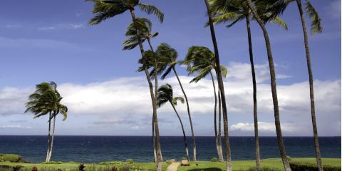 5 Crucial Steps to Take After a Hurricane, Honolulu, Hawaii