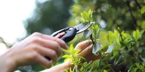 5 Items for Your End-of-Summer Landscaping Checklist, Asheboro, North Carolina