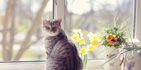 3 Tips to Keep Pets Safe Around Floral Arrangements, Enterprise, Alabama