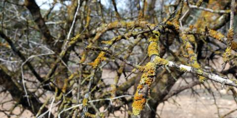 3 Diseases That Can Wreak Havoc on Your Trees, Clinton, Michigan