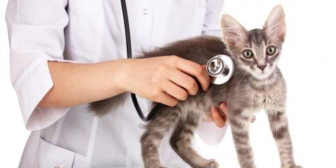 Cabot Veterinarian Explains the Importance of Pet Wellness Exams, York, Arkansas
