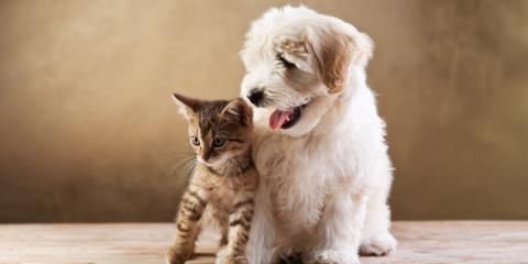 6 Vital Vaccines for Dogs & Cats, High Point, North Carolina