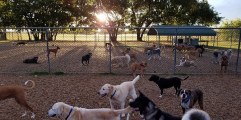 JD Kennels Camp David for Dogs and Cats, Kennels, Services, Royse City, Texas
