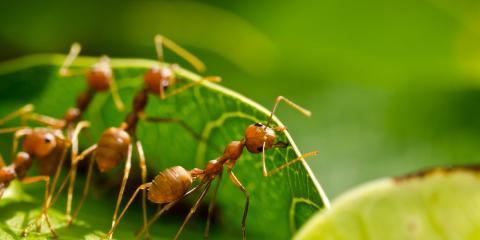 Spring Ant Invasion: An Exterminator Explains Why It Happens, Jefferson City, Missouri