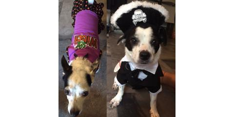 5 Veterinarian-Approved Ways To Keep Your Pet Safe This Halloween, Ewa, Hawaii