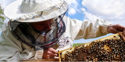 What is Beeswax & Why Bee Removal Is Important, Kernersville, North Carolina