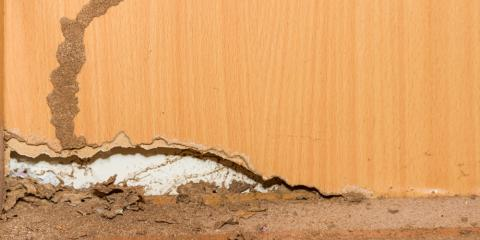 5 Sure Signs Termites Are Invading Your Property, Kernersville, North Carolina