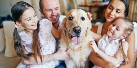 A Guide to Estate Planning for Your Pets, Jewett City, Connecticut