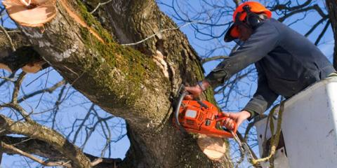 Beyond Pruning: These 3 Signs From J&R Services Indicate Your Tree Needs to be Removed, Northeast Travis, Texas