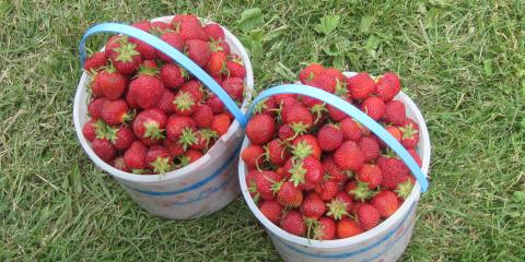 Strawberry Season at Cranberry Country Market, Byron, Wisconsin