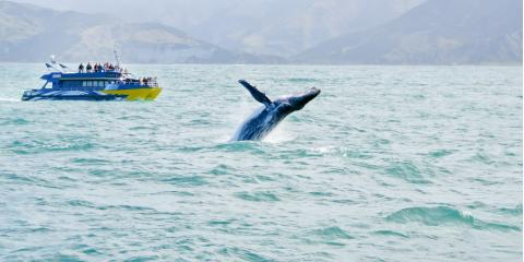 What You Need to Know About Whale Breaching, Juneau, Alaska