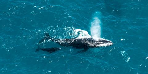 4 FAQs About Whale Watching Tours, Juneau, Alaska