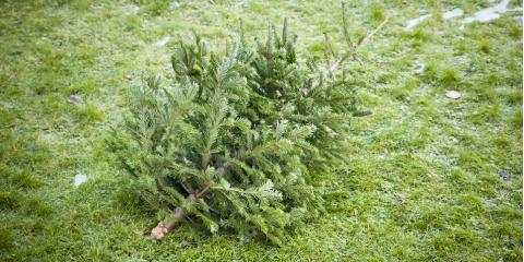 Junk-Hauling Pros: Let Us Take Your Holiday Tree in January, Austin, Texas