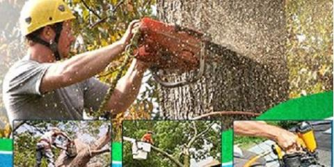JW Tree and Land Services, Landscaping, Services, Austin, Texas