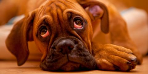 3 Useful Tips to Help Your Dog Overcome Separation Anxiety, Milford, Connecticut