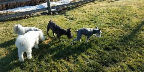 The Pros & Cons of Socializing Your Dog at Dog Camp, Bad Rock-Columbia Heights, Montana