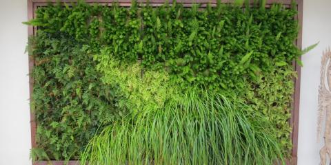Which Factors Contribute to Healthy Living Walls?, Ewa, Hawaii