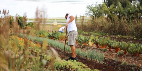 5 Reasons You Should Buy Local Food & Produce, Kahuku, Hawaii