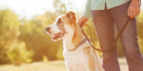 Why You Should Take Time Off Work After Losing a Pet, Koolaupoko, Hawaii