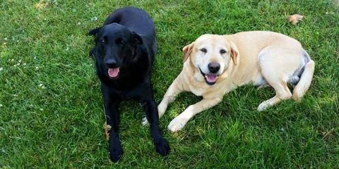 4 Reasons In-Home Dog Boarding is an Enjoyable Experience for Pets , Bad Rock-Columbia Heights, Montana
